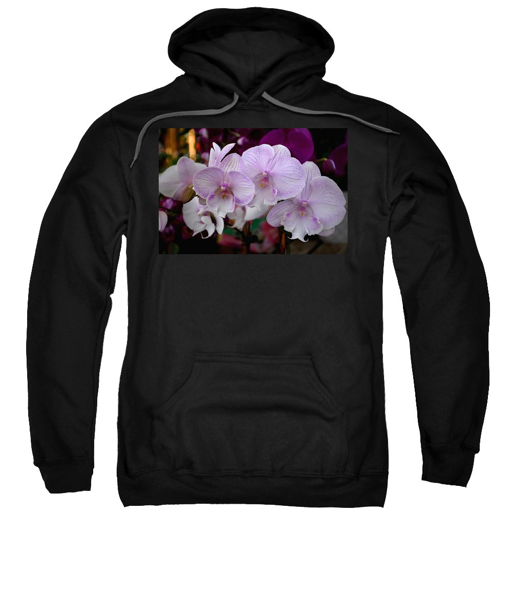 Orchids Photos Sweatshirt featuring the photograph Flowers 824 by Joyce StJames