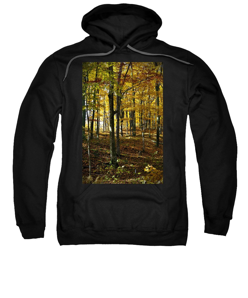 Trees Sweatshirt featuring the photograph Forest Floor One by Tim Nyberg