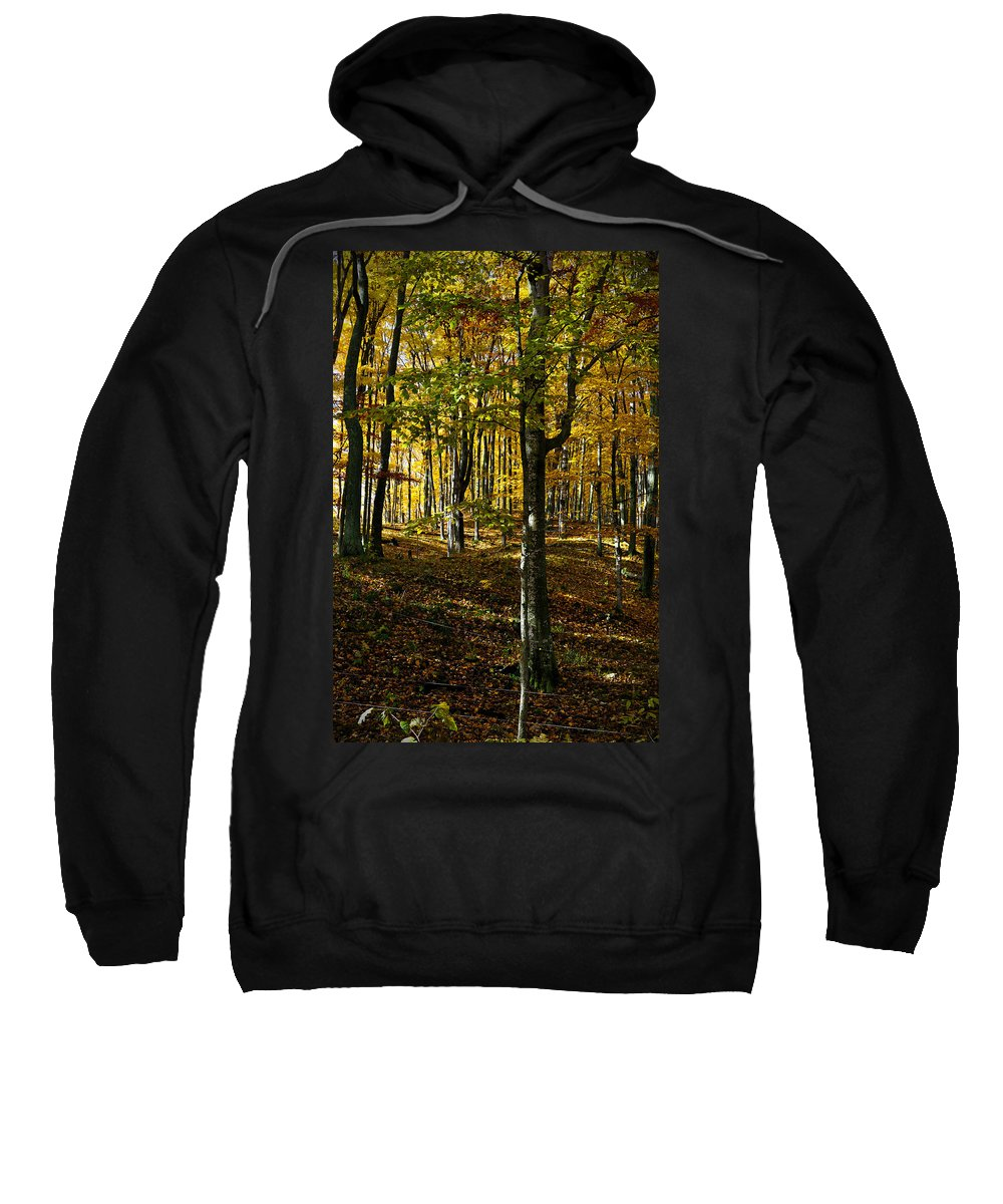 Trees Sweatshirt featuring the photograph Forest Floor Two by Tim Nyberg