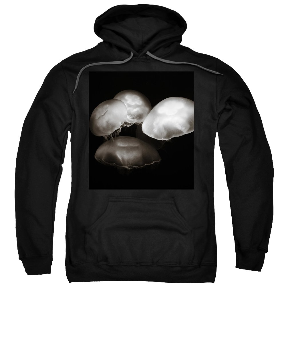 Jellyfish Sweatshirt featuring the photograph Four Jellyfish by Marilyn Hunt