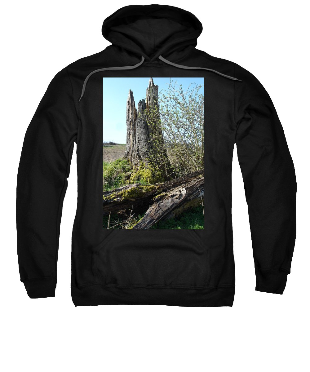 Tree Sweatshirt featuring the photograph From Old Springs New by Susan Baker
