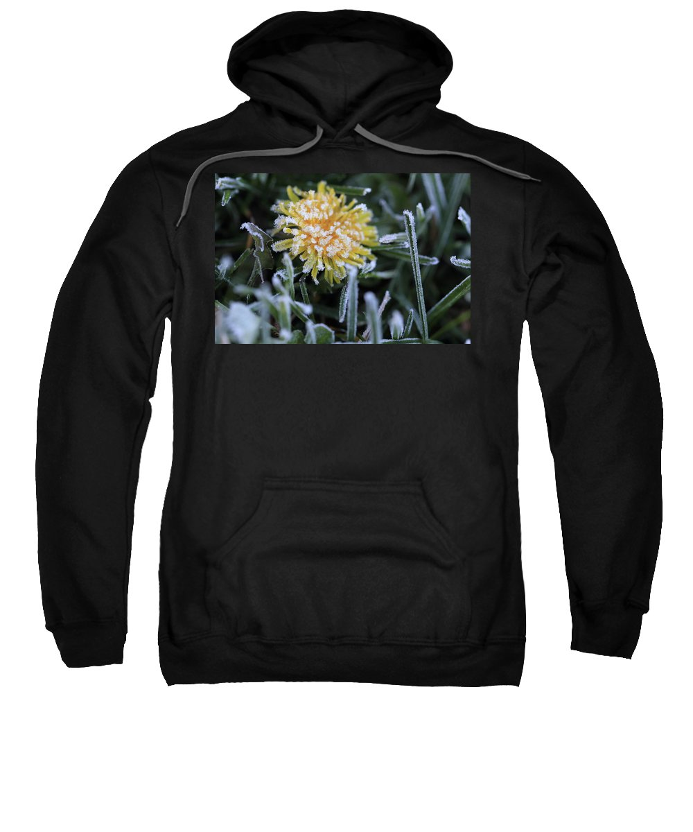 Flower Sweatshirt featuring the photograph Frosted Not Glazed by Shelley Neff