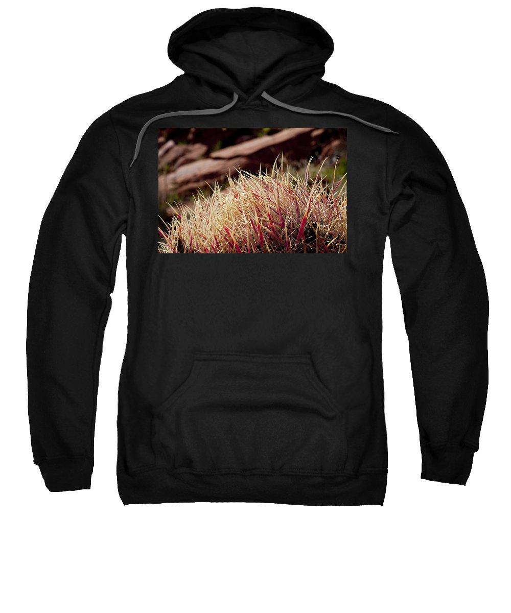 Barrel Cactus Sweatshirt featuring the photograph Frosted Tips by Kelley King