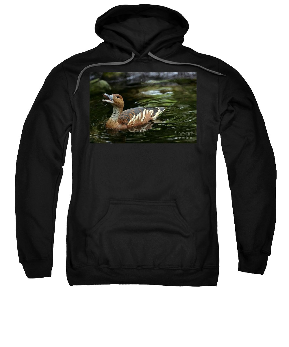 Duck Sweatshirt featuring the photograph Fulvous Whistling Duck 2 by Randy Matthews