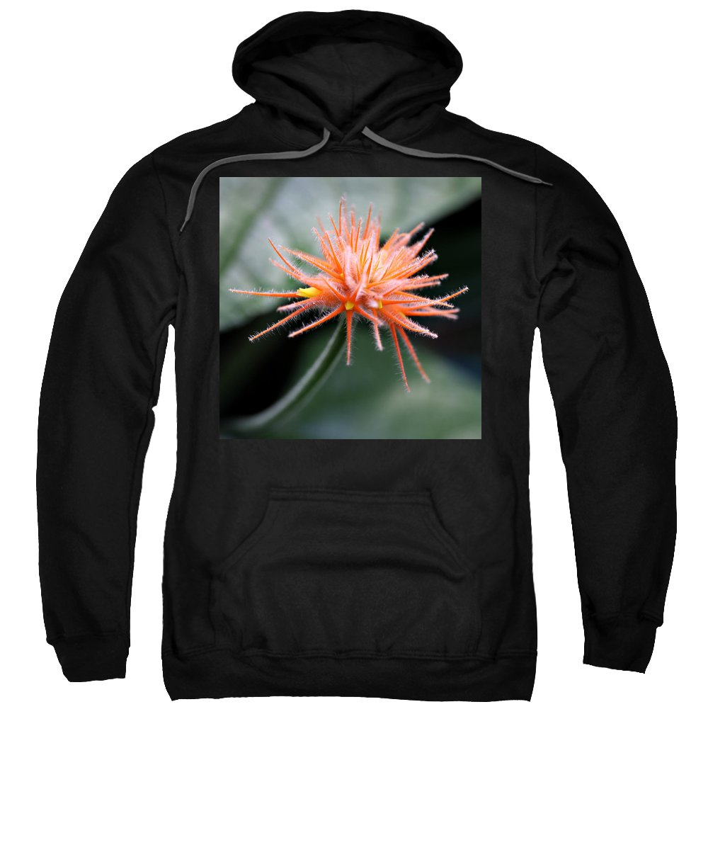 Flower Orange Fair Child Gardens Miami Tropical Photography Sweatshirt featuring the photograph Fuzzy Orange by Norah Holsten