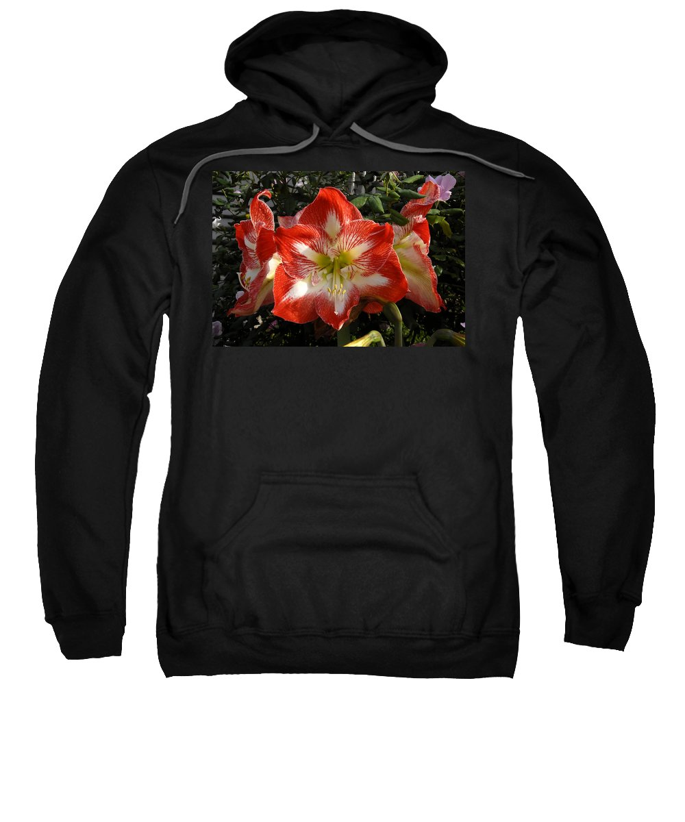 Garden Sweatshirt featuring the photograph Garden Flowers by David Lee Thompson
