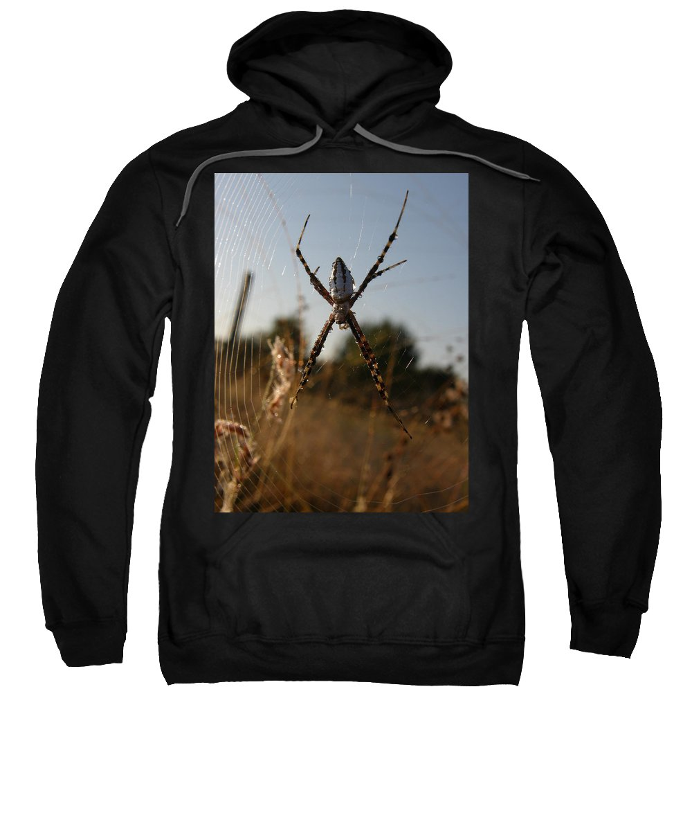 Spider Sweatshirt featuring the photograph Garden Spider by Kimberly Mohlenhoff