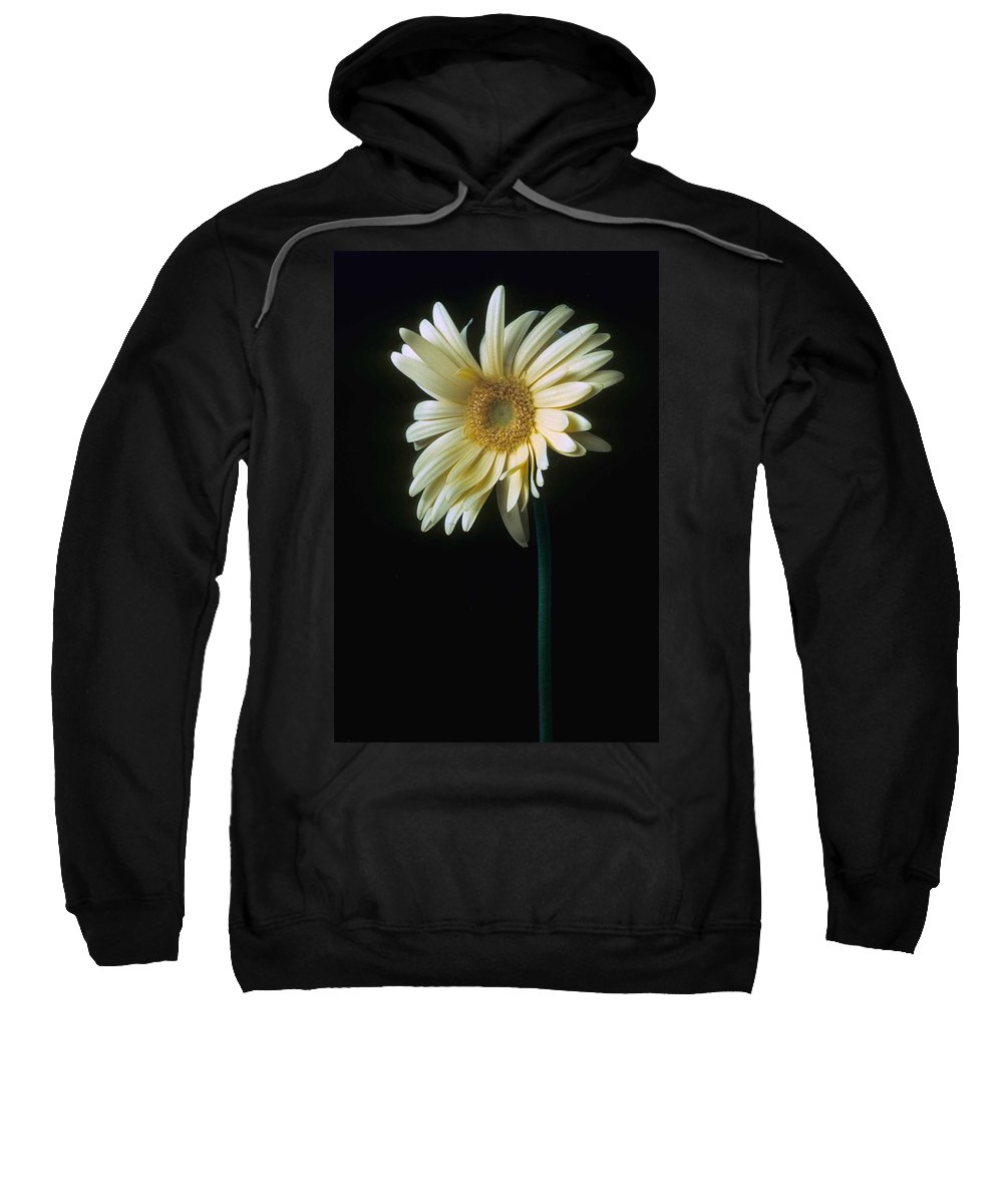 Gerber Sweatshirt featuring the photograph Gerber Daisy by Laurie Paci