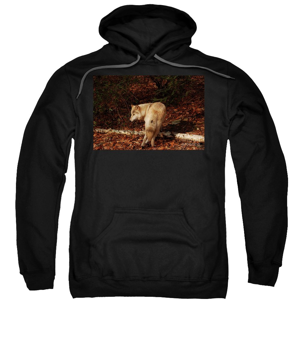 Wolf Sweatshirt featuring the photograph Get Back It's My Stick by Lori Tambakis