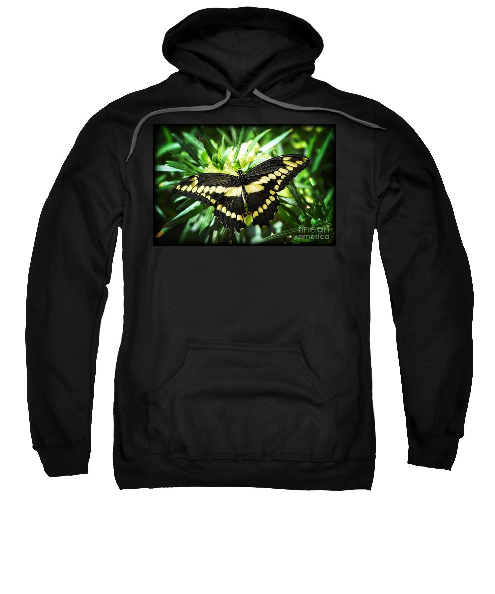 Giant Swallowtail Butterfly Sweatshirt featuring the photograph Giant Swallowtail by Saija Lehtonen
