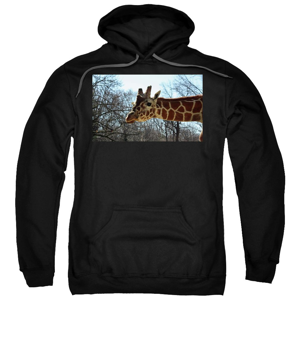 Maryland Sweatshirt featuring the photograph Giraffe Stretching For A View by Ronald Reid