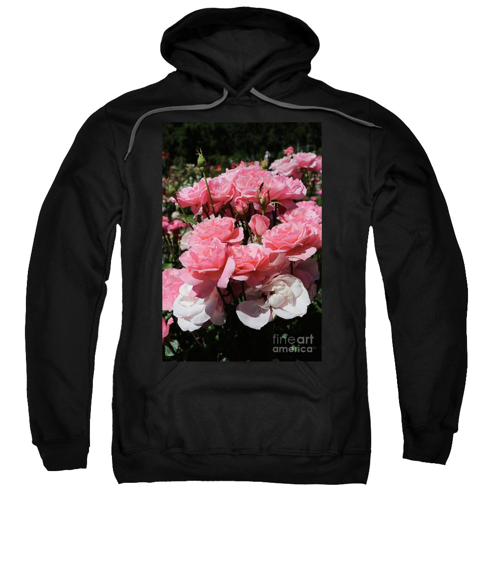 Pink Roses Sweatshirt featuring the photograph Glorious Pink Roses by Carol Groenen
