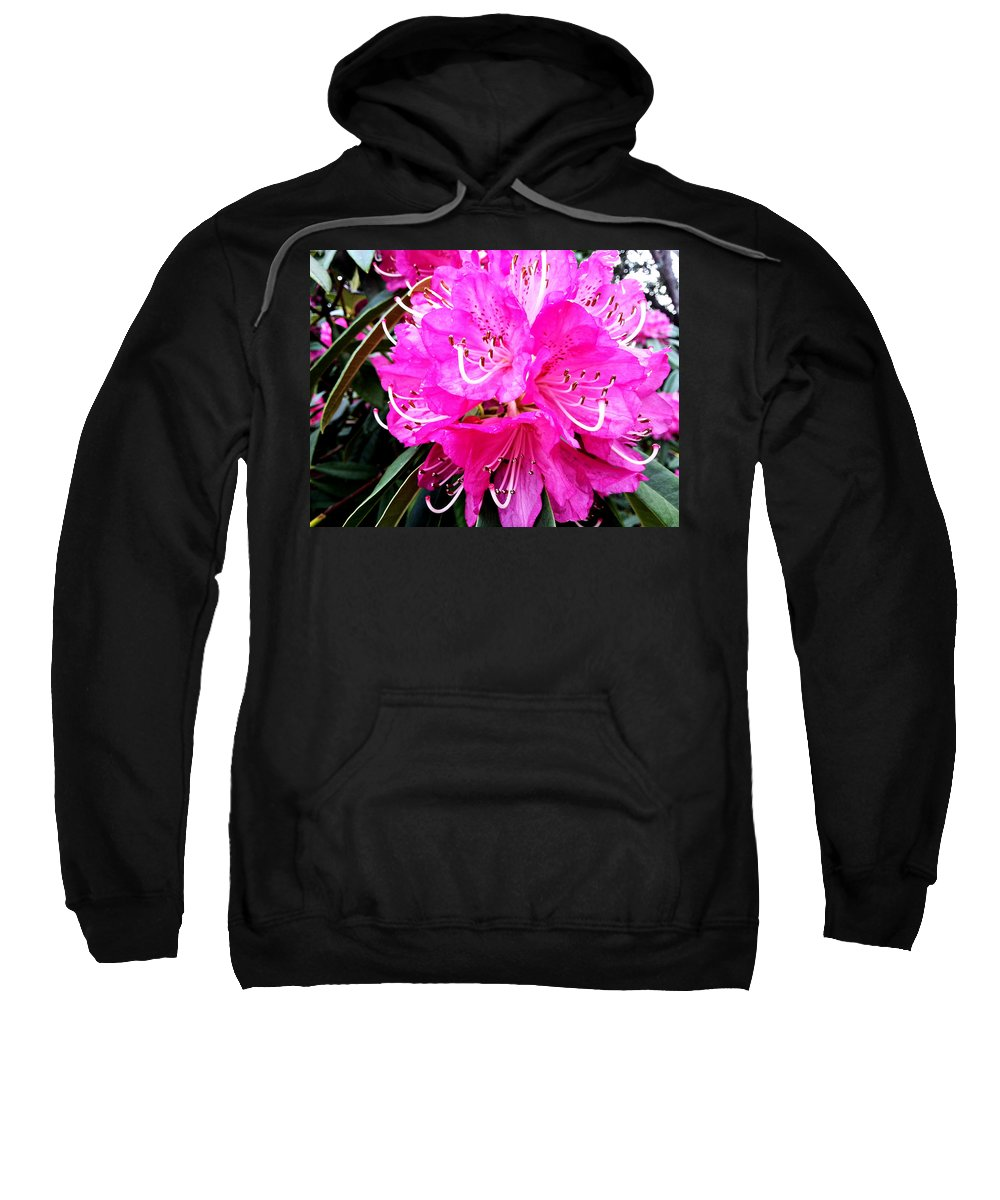 Nature Sweatshirt featuring the photograph Glowing Pink by Wayne Henry
