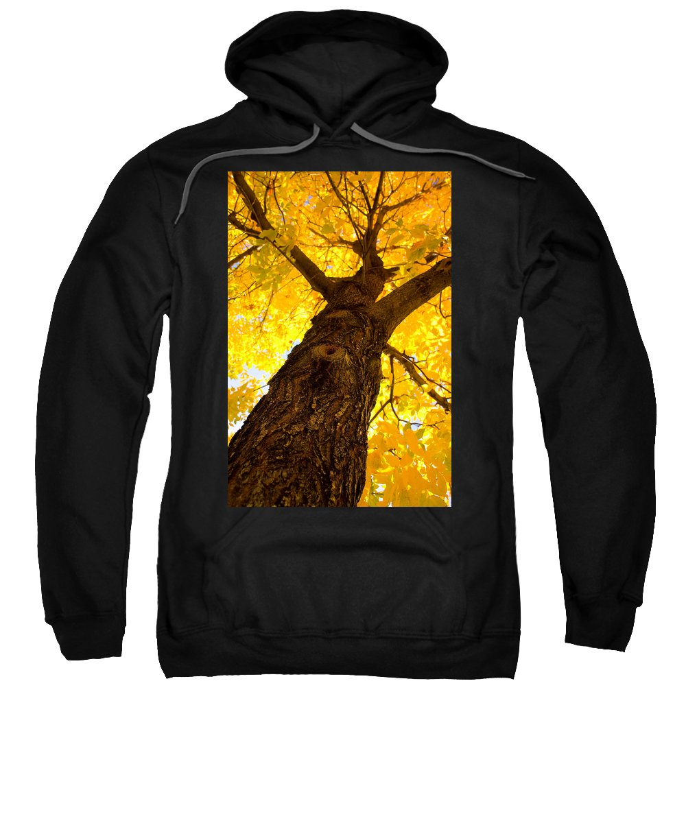 Gifts Sweatshirt featuring the photograph Golden Climb by James BO Insogna