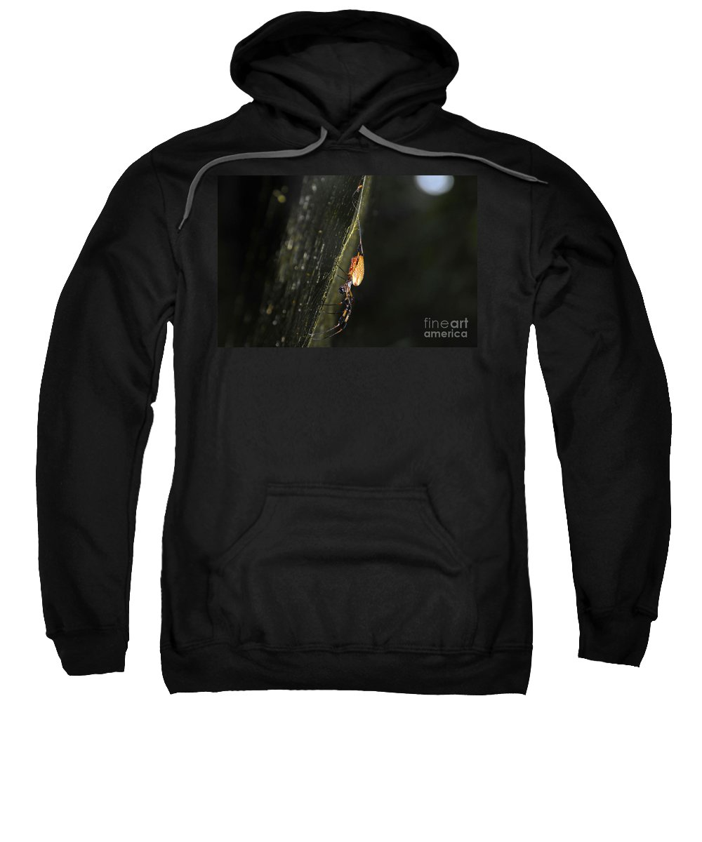 Golden Orb Spider Sweatshirt featuring the photograph Golden Orb Spider by David Lee Thompson