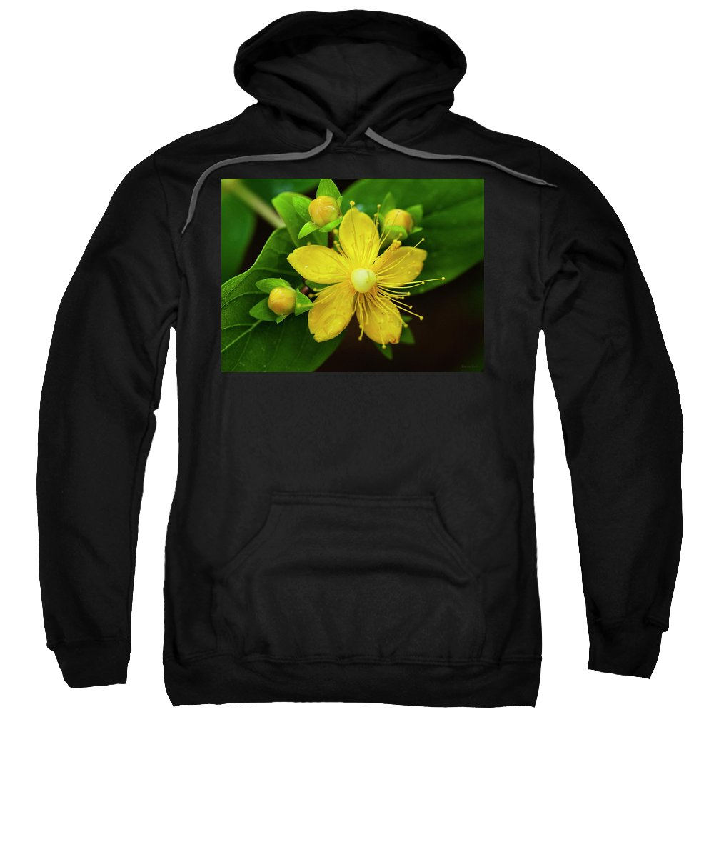 Bloom Sweatshirt featuring the photograph Gold Rush In The Garden by Korrine Holt