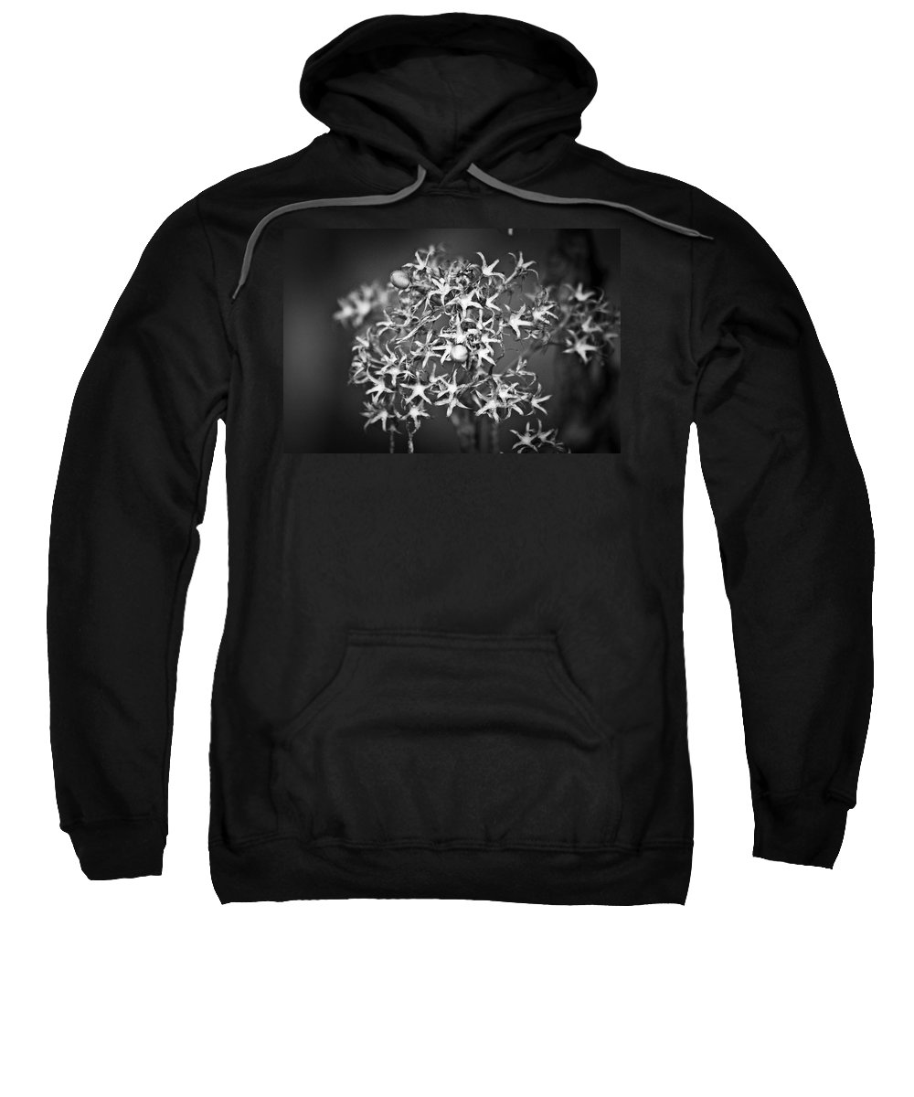 Flower Sweatshirt featuring the photograph Gone To Seed Phlox by Teresa Mucha