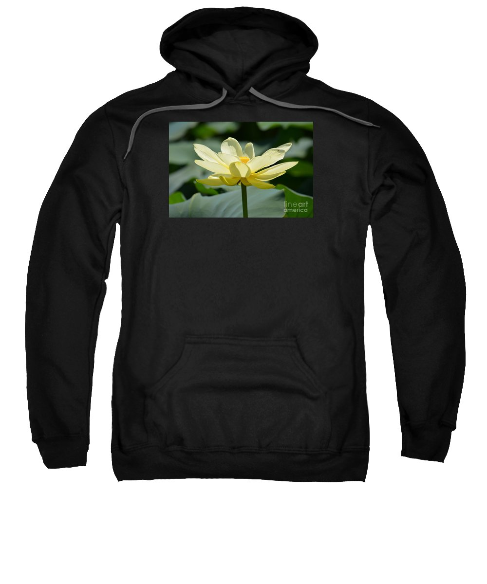 Gorgeous Lotus Flower Prints Sweatshirt featuring the photograph Gorgeous Lotus Flower by Ruth Housley