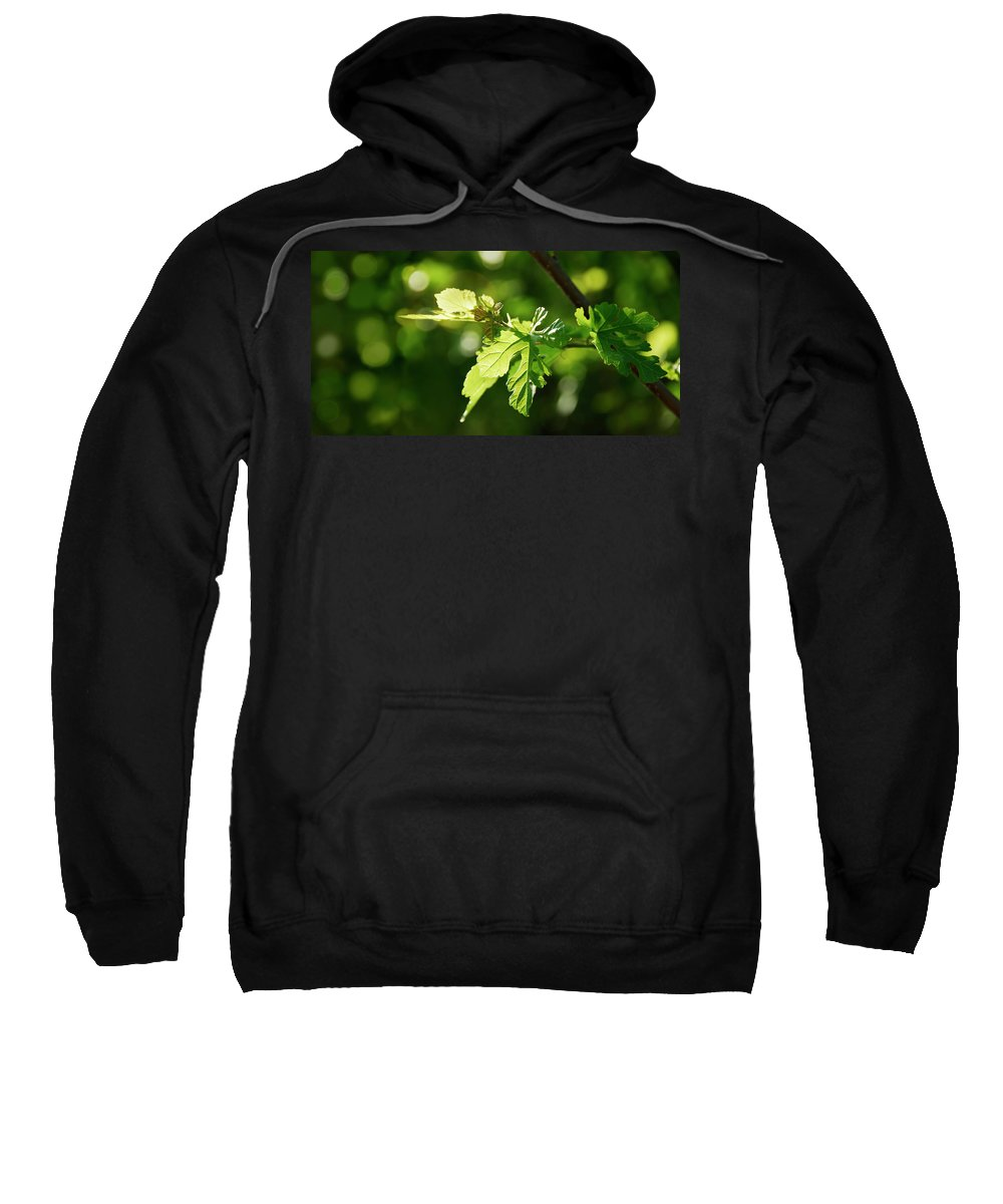 Wild Sweatshirt featuring the photograph Grape Leaves In Spring by Francesa Miller