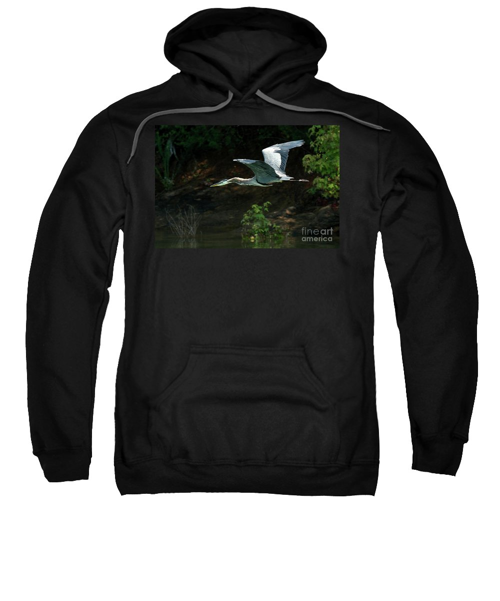 Heron Sweatshirt featuring the photograph Great Blue Fly-by II by Douglas Stucky