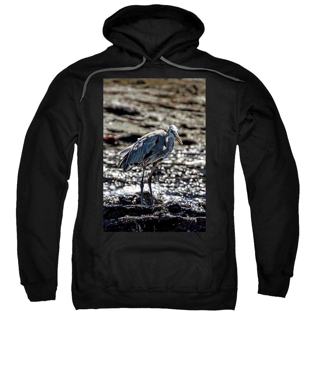 Heron Sweatshirt featuring the photograph Great Blue Heron In Galapagos by John Haldane