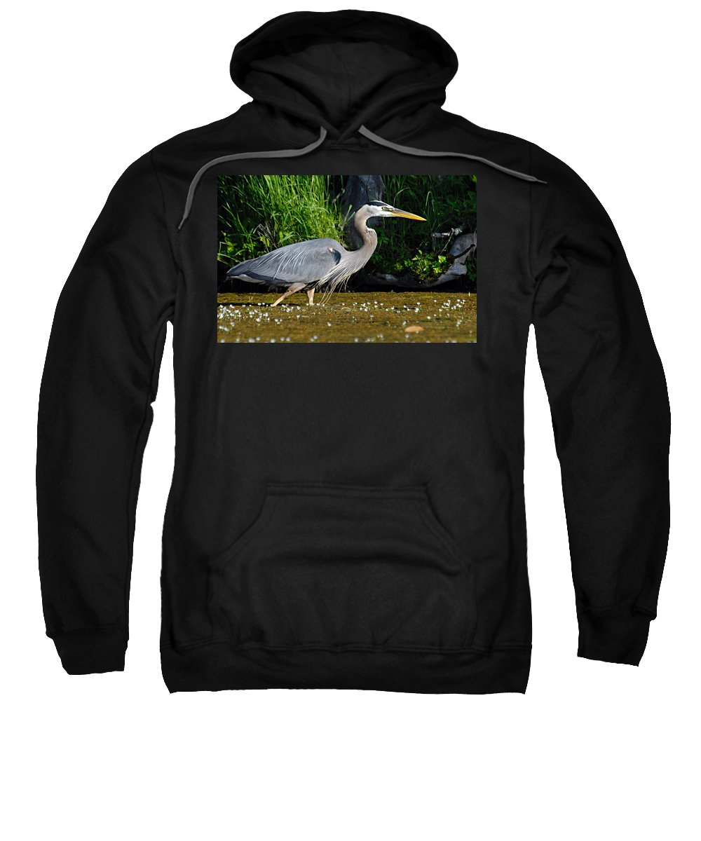 Great Blue Heron Sweatshirt featuring the photograph Great Blue Heron by Larry Ricker