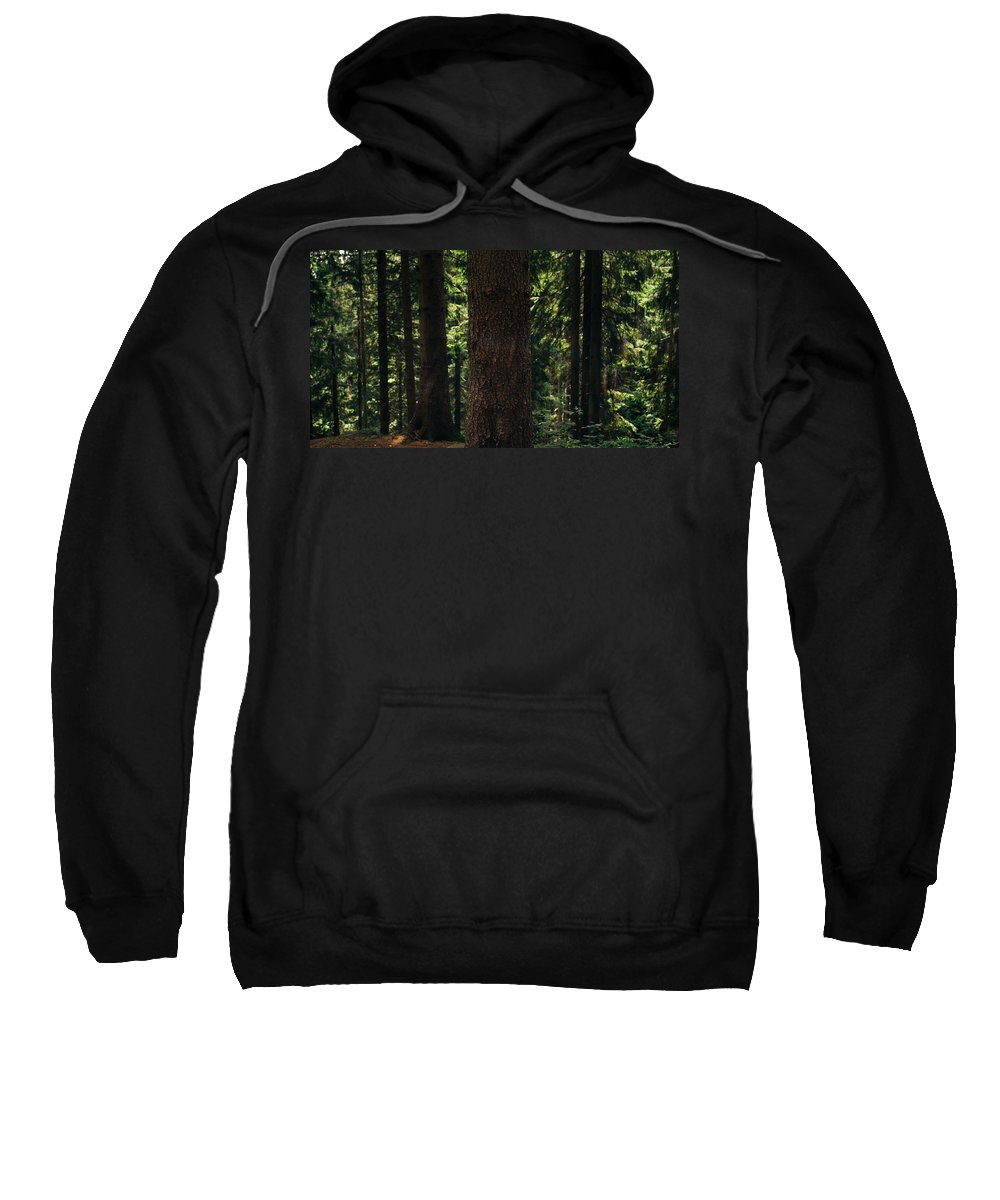 Landscape Sweatshirt featuring the photograph Green Forest by Pati Photography