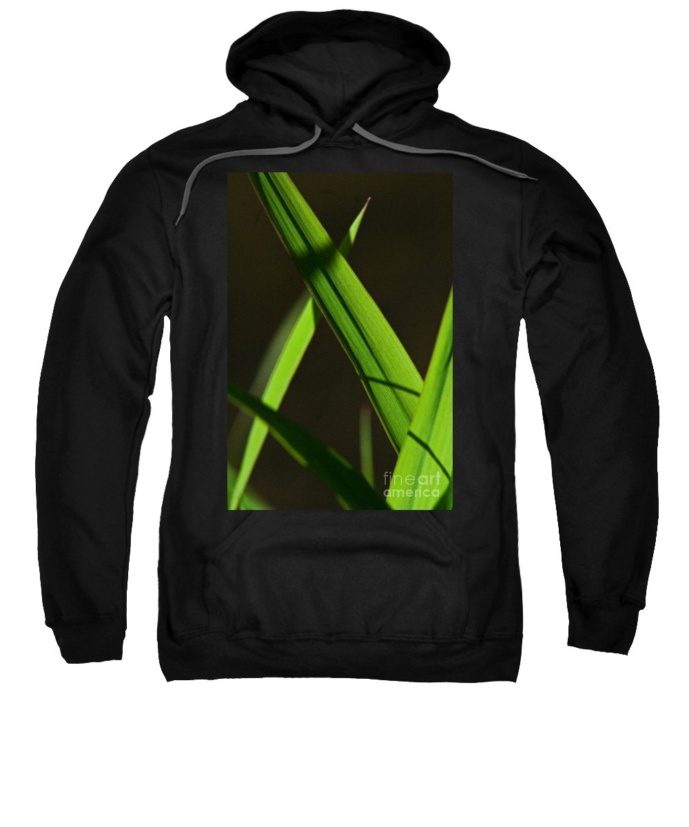 Green Sweatshirt featuring the photograph Green Leaves In Sunlight by Martha Johnson