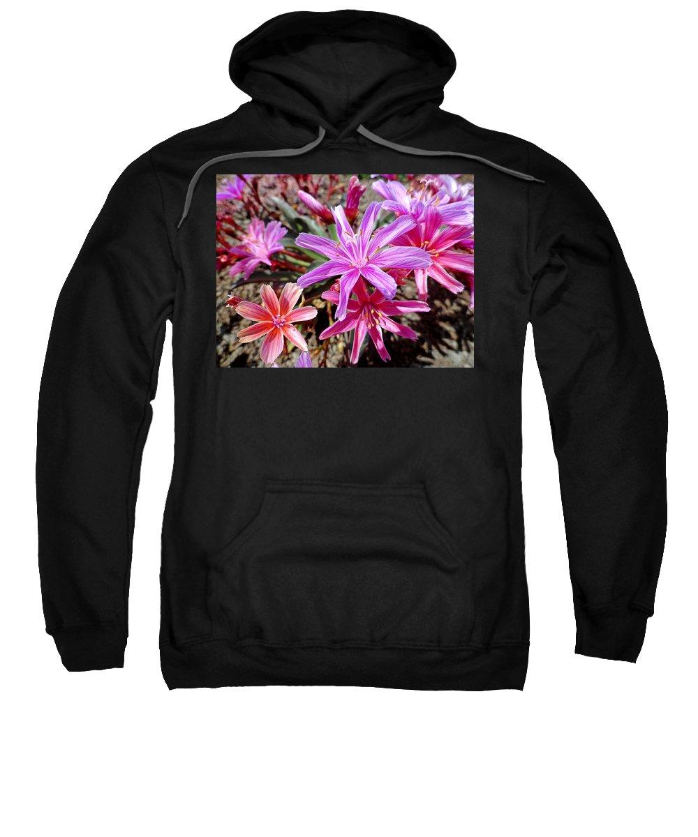 Ground Sweatshirt featuring the photograph Ground Stars by Robert Meyers-Lussier