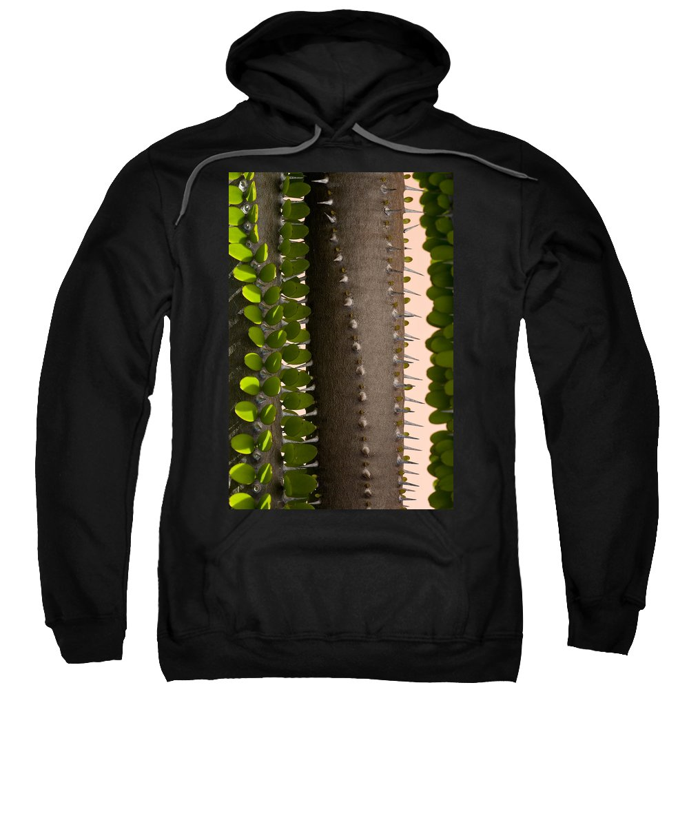 Cactus Sweatshirt featuring the photograph Growth Contrast 2 by Kelley King