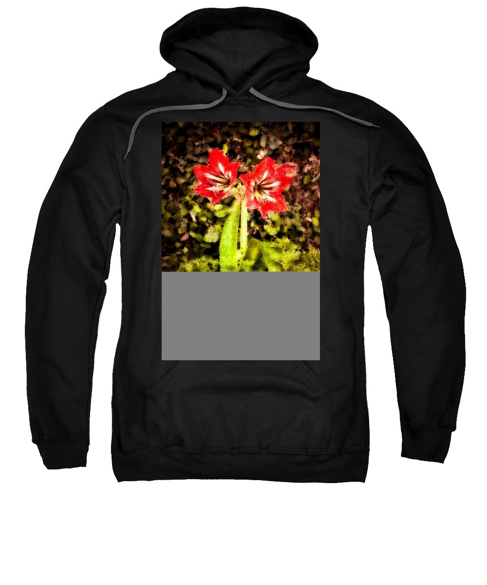 Abstract Sweatshirt featuring the photograph Havana Amaryllis by Rich Leighton