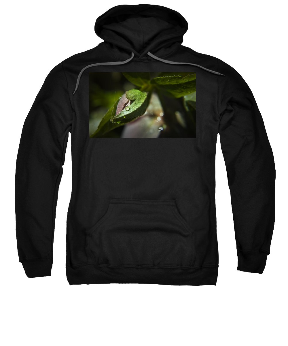 Helleborus Sweatshirt featuring the photograph Helleborus Bud by Teresa Mucha