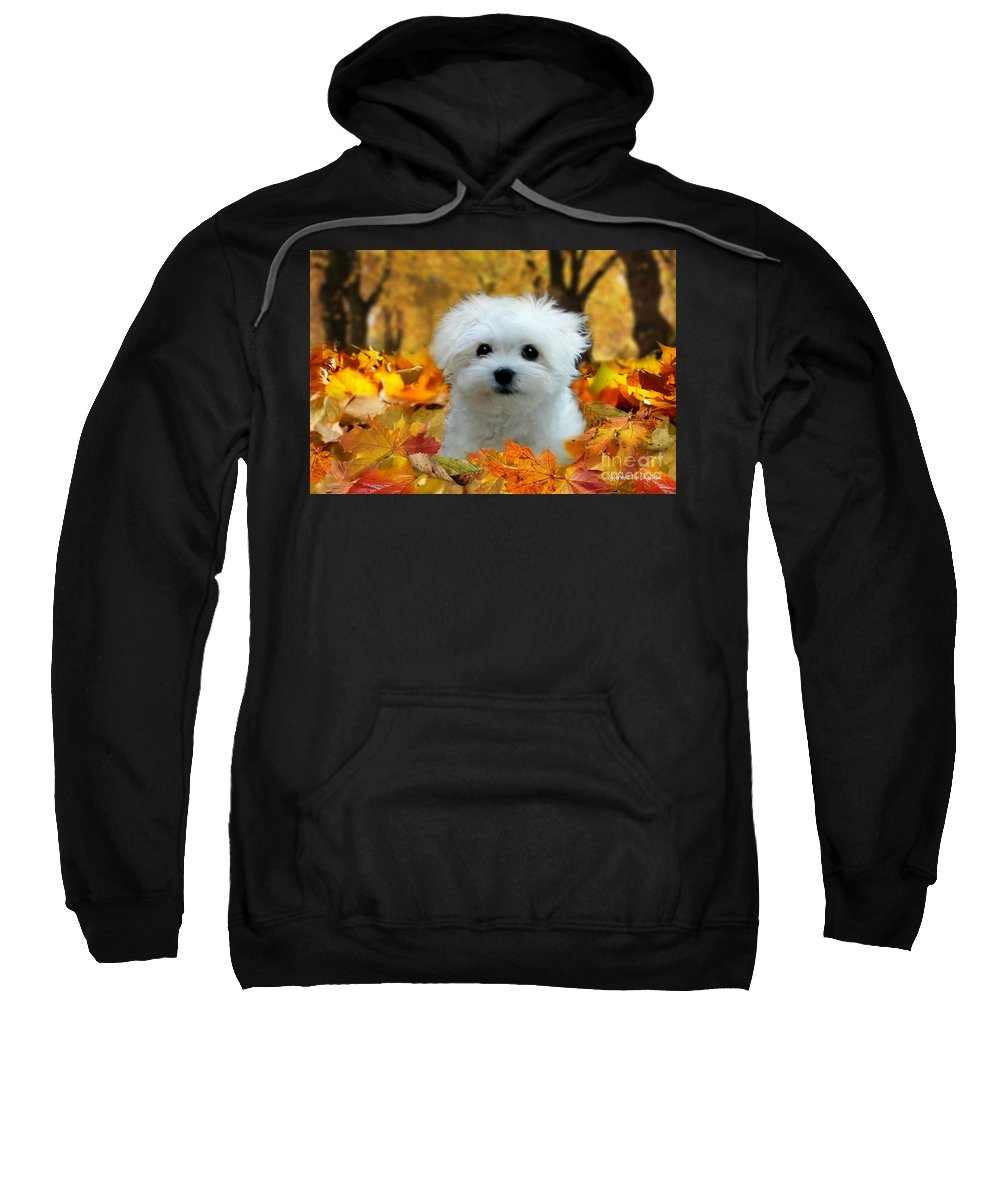 Maltese Puppy Sweatshirt featuring the pyrography Hermes In The Fall by Morag Bates