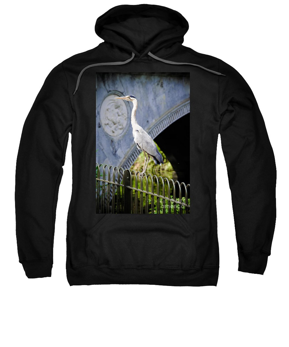 Wildlife Sweatshirt featuring the photograph Heron Show Off by F Helm