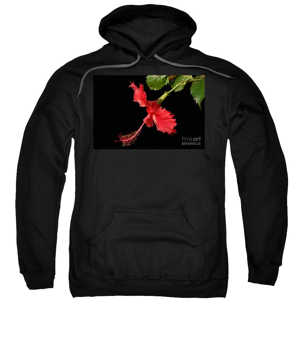 Red Hibiscus Sweatshirt featuring the photograph Hibiscus On Black Background by Charuhas Images