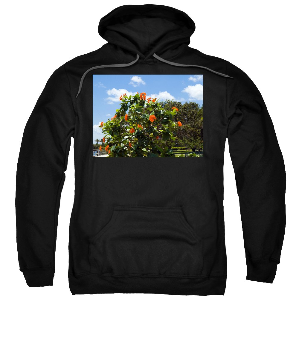 Hibiscus; Rosasinensis; Rosa; Sinensis; Rosa-sinensis; Tree; Bush; Shrub; Plant; Flower; Flowers; Fl Sweatshirt featuring the photograph Hibiscus Rosasinensis With Fruit by Allan Hughes