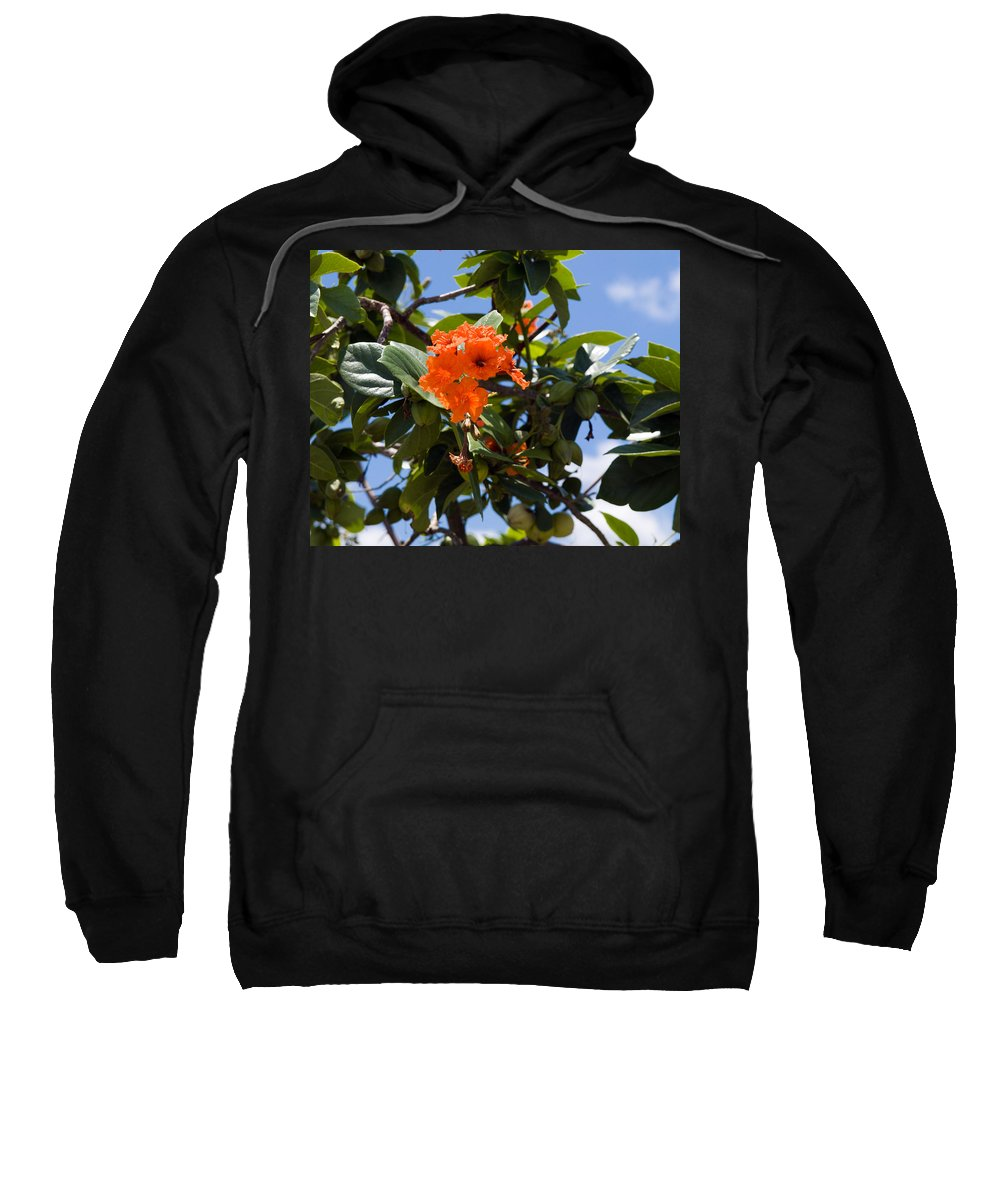 Hibiscus; Rosasinensis; Rosa; Sinensis; Rosa-sinensis; Tree; Bush; Shrub; Plant; Flower; Flowers; Fl Sweatshirt featuring the photograph Hibiscus Rosasinensis With Fruit On The Indian River by Allan Hughes