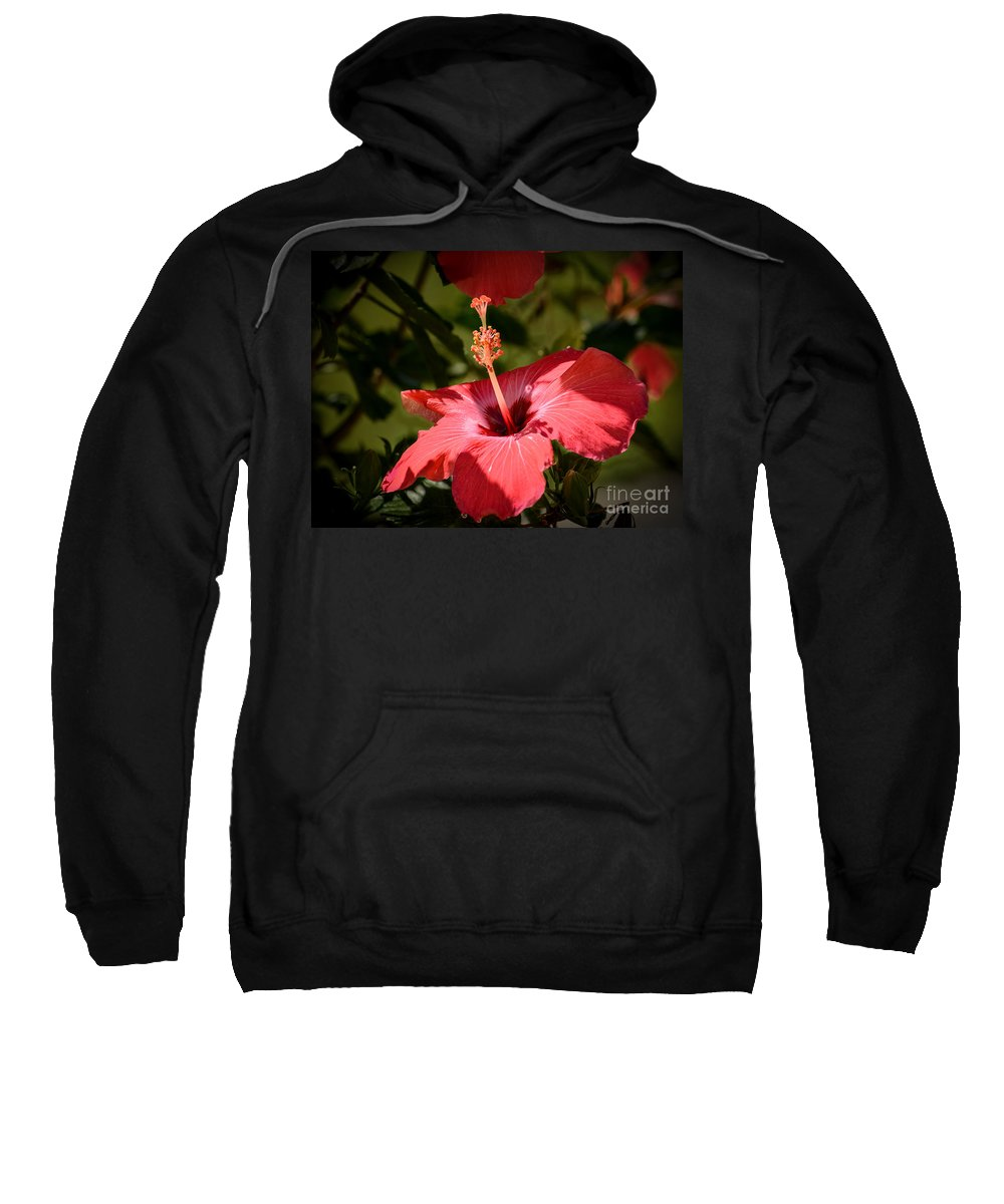 Red Hibiscus Sweatshirt featuring the photograph Hibiscus by Zina Stromberg