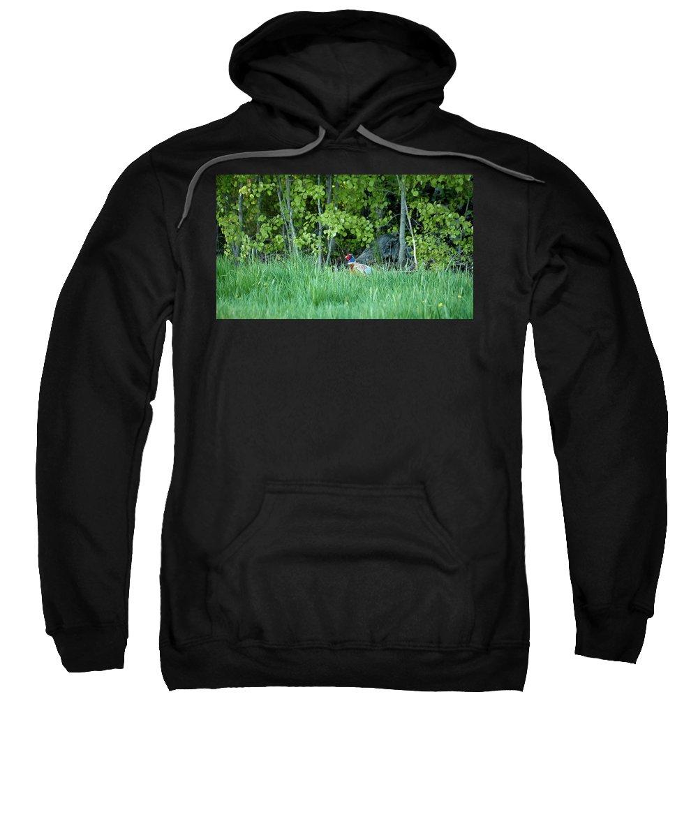 Lehtokukka Sweatshirt featuring the photograph Hiding In The Grass. Pheasant by Jouko Lehto
