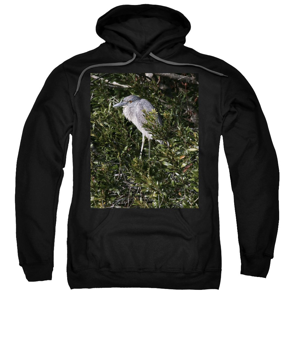 Bird Sweatshirt featuring the photograph Hiding by Phill Doherty