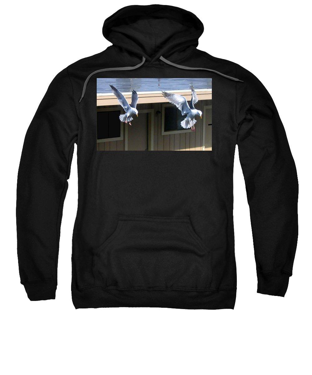 Seagulls Sweatshirt featuring the photograph High Spirits by Will Borden