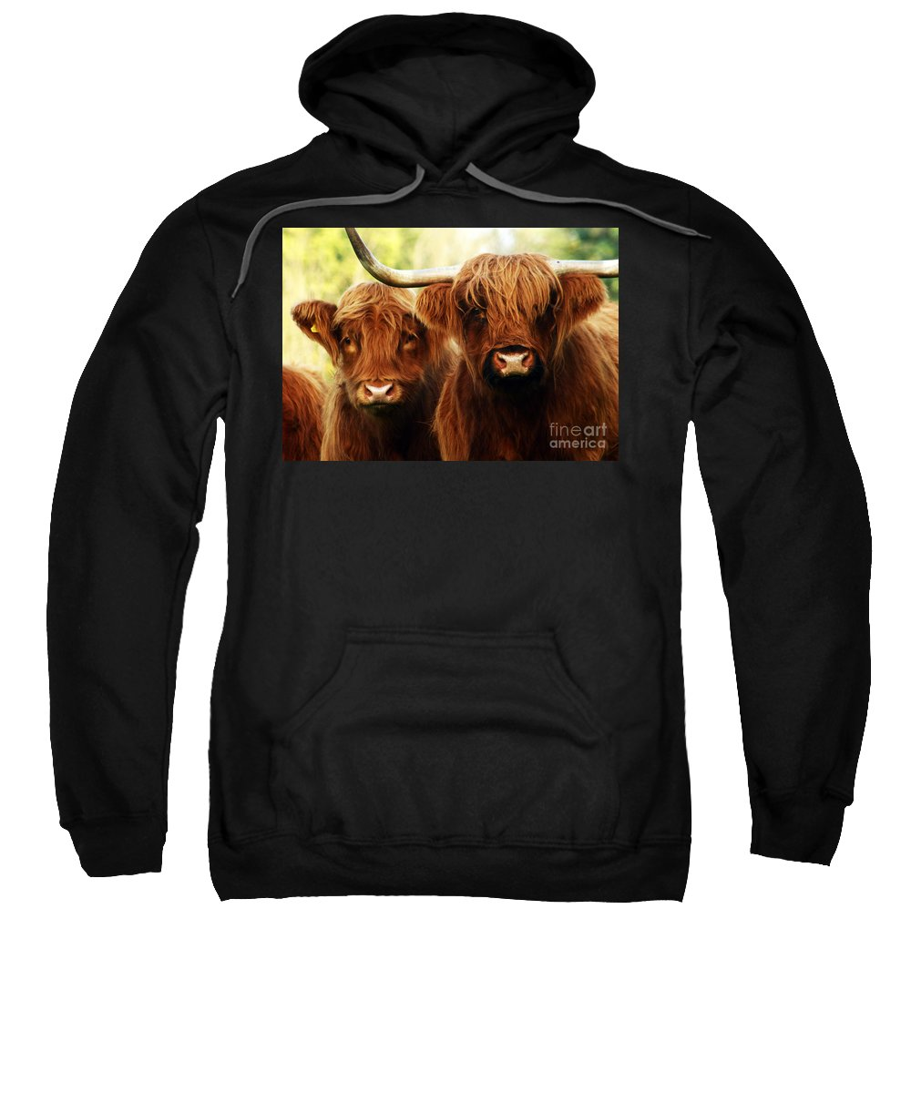Cow Sweatshirt featuring the photograph Highland Cows by Angel Ciesniarska
