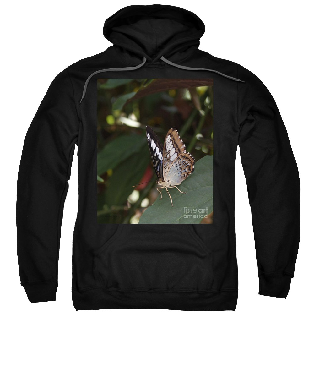 Butterfly Sweatshirt featuring the photograph Hints Of Blue by Shelley Jones