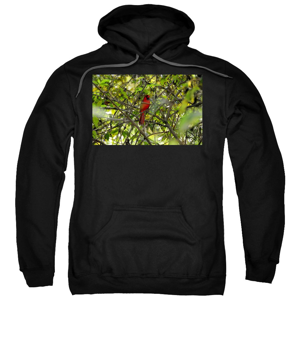 Red Sweatshirt featuring the photograph His Majesty by David Lee Thompson