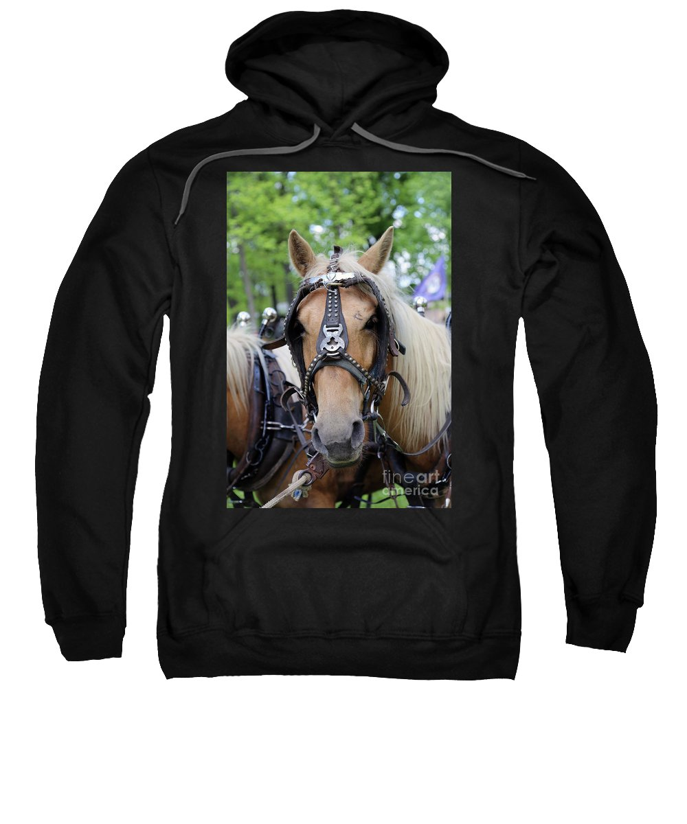 Mule Sweatshirt featuring the photograph Horses 2 by Dwight Cook