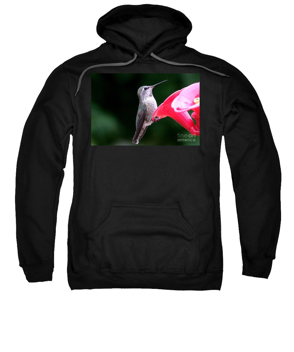 Red Sweatshirt featuring the photograph Hummingbird 23 by Mary Deal