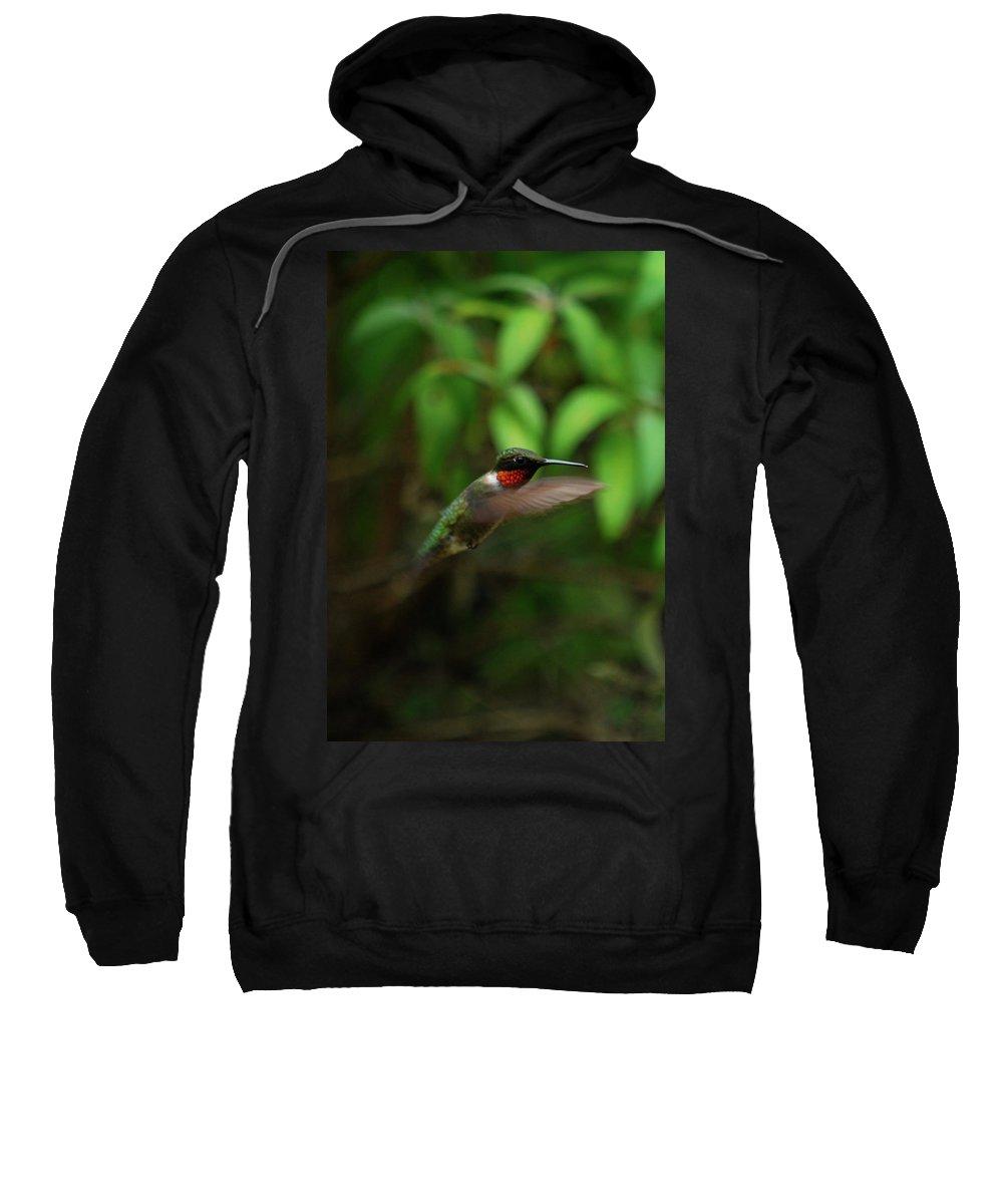 Hummingbird Sweatshirt featuring the photograph Hummmm by Lori Tambakis
