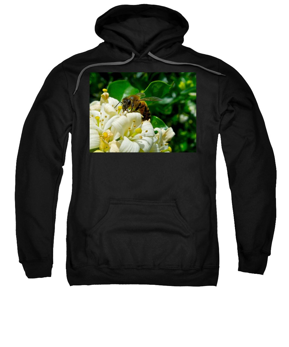 Animals Sweatshirt featuring the photograph I'm Watching You by Dale Chapel