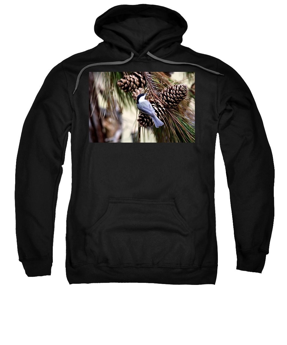 Carolina Chickadee Sweatshirt featuring the photograph Img_0215-022 - Carolina Chickadee by Travis Truelove