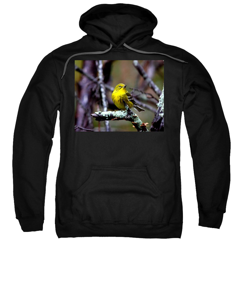 Pine Warbler Sweatshirt featuring the photograph Img_8197-001 - Pine Warbler by Travis Truelove